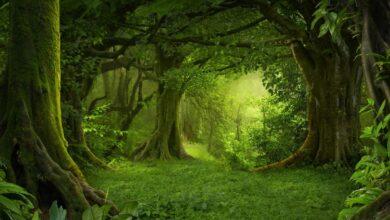 الغابة الخضراء
