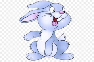 صورة لأجمل الأرانب